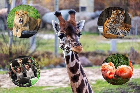 Granby Zoo and Berry Picking 1 day tour