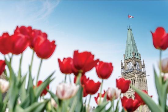 Ottawa Festival des tulipes 1 jour